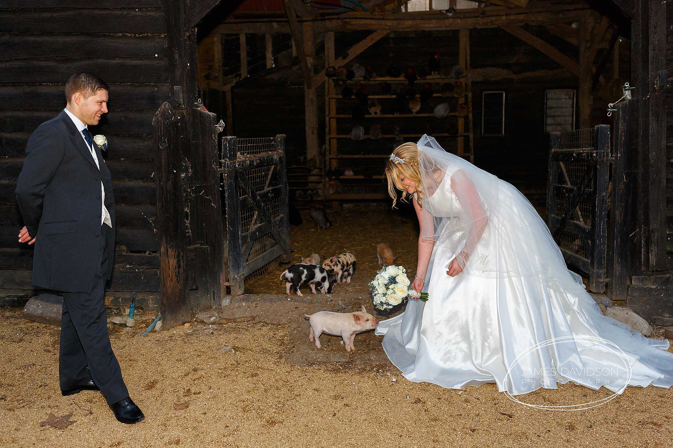 South Farm wedding piglets