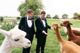 alpaca wedding photographer